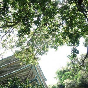 新緑の五重塔
