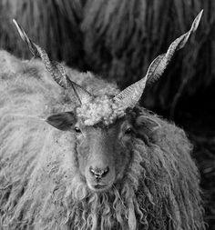2015・羊年